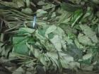 Picture of Dried Ugu Leaf 20g