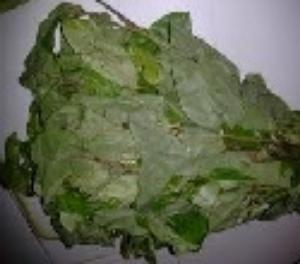 Picture of Fresh Oha (Pterocarpus Mildraedii)