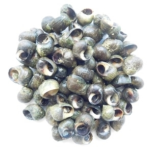Picture of Periwinkle in Shell 300g (Freshly Frozen)