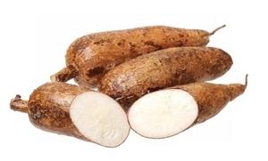 Picture of Fresh Cassava Tuber (Manihot esculenta)