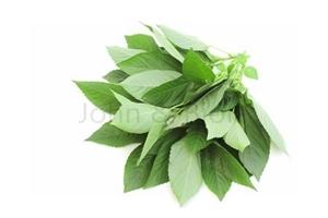 Picture of Fresh Molokhia (Ewedu)
