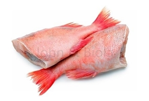 Picture of Red Bream
