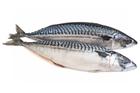 Picture of Mackerel