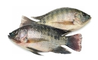 Picture of Tilapia Large
