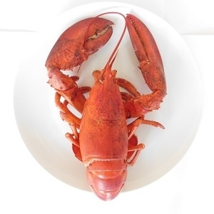 Picture of Fresh UK Lobster (Gutted, Cleaned, Frozen, Uncooked, Whole)