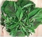 Picture of Frozen Whole Fresh Soko Leaf (Celosia Argentea)